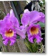 Pretty Purple Orchids Metal Print