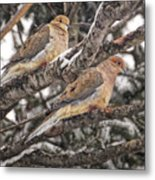 Pair Of Morning Doves Metal Print