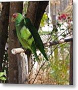 Pair Of Parrots Metal Print