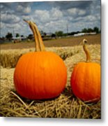 Pair Of Perfect Pumpkins Metal Print
