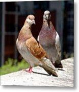 Pair Of Pigeons Metal Print