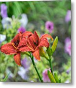 Pair Of Red Asiatic Lilies After A Rain Metal Print
