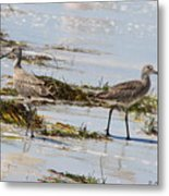 Pair Of Willets Metal Print