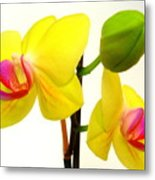 Pair Of Yellow Orchids Metal Print
