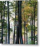 Palatine Forest Metal Print