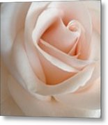 Pale Of Rose Metal Print