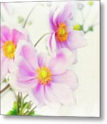 Pale Pink Anemone Metal Print