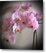 Pale Pink Orchids B W And Pink Metal Print
