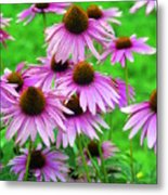 Pale Purple Coneflowers Metal Print