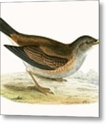 Pale Thrush Metal Print