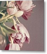 Pale Tulips Metal Print