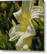 Pale Yellow Lily In A Garden Of Daylilies Metal Print