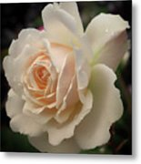 Pale Yellow Rose After The Rain - Glow Metal Print