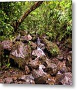 Palikes Stream Along Trail Metal Print