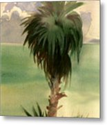 Palm At Horseshoe Cove Metal Print
