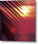 Palm At Sunset Metal Print