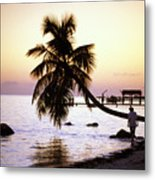 Palm At The Moorings Metal Print