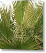 Palm Bush Metal Print