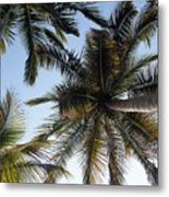 Palm Collection - Standing Tall Metal Print