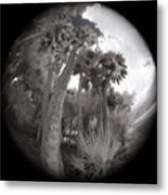 Palm Community Metal Print