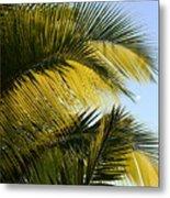 Palm Detail Metal Print