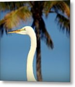 Palm Egret Metal Print