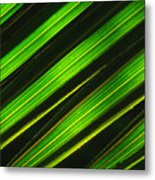 Palm Frond Abstract Metal Print