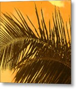 Palm Frond Sunset Metal Print