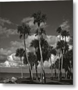 Palm Group In Florida Bw Metal Print
