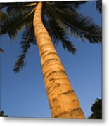 Palm In Blue Sky Metal Print