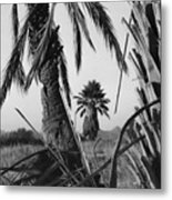 Palm In View Bw Horizontal Metal Print