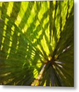 Palm Leaves And Morning Light Metal Print