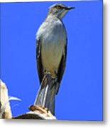 Palm Mocking Bird Metal Print by Deborah Benoit