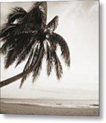 Palm Over Beach Metal Print