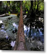 Palm Over Spring Metal Print