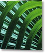Palm Patterns Metal Print