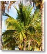 Palm Portrait Metal Print