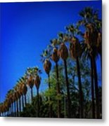 Palm Row Metal Print