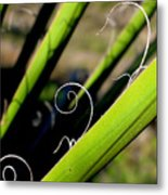 Palm Strings Metal Print