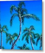 Palm Tops Metal Print