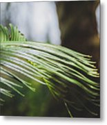 Palm Tree 5 Metal Print