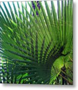 Palm Tree, Big Leafs Metal Print