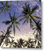Palm Tree Grove Metal Print