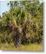 Palm Tree In Golden Grass Metal Print