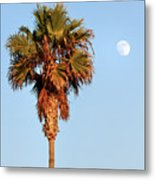 Palm Tree In Huntington Beach Metal Print