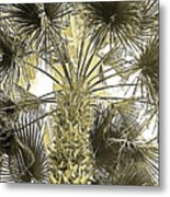 Palm Tree Pen And Ink Grayscale With Sepia Tones Metal Print