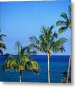 Palm Tree Tops Metal Print