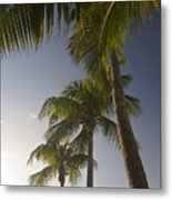 Palm Trees At Sunset Metal Print