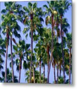 Palm Trees. California, Sunny Beauty Metal Print