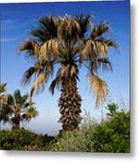 Palm Trees Growing Along The Beach Metal Print